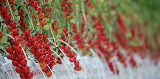 西红柿怎么吃最有营养
