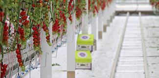 种菜相关农业技术知识